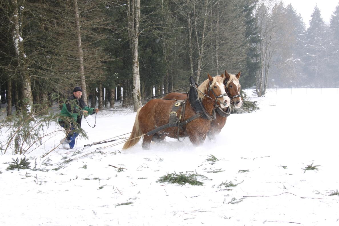 Pferderücker